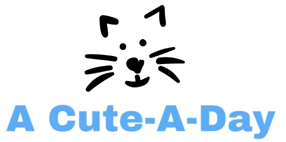 ACuteADay - Your Source for the Best Rated Pet Supplies and Accessories