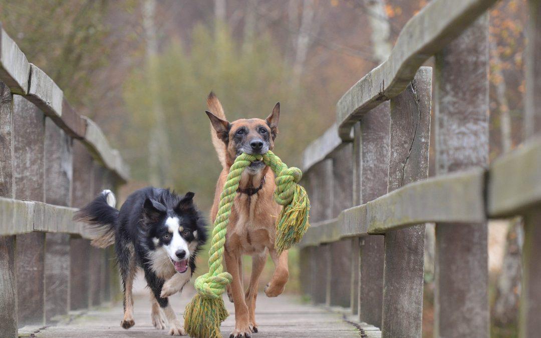Importance of dog toys
